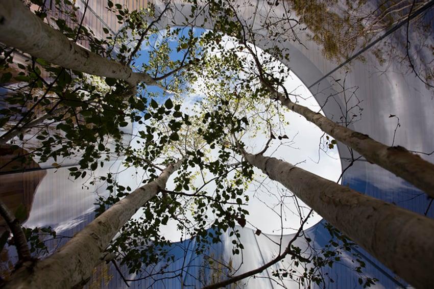 A triple-stemmed Betula Pendula Szechuanica growths through the buildings centre. Alex de Rijke