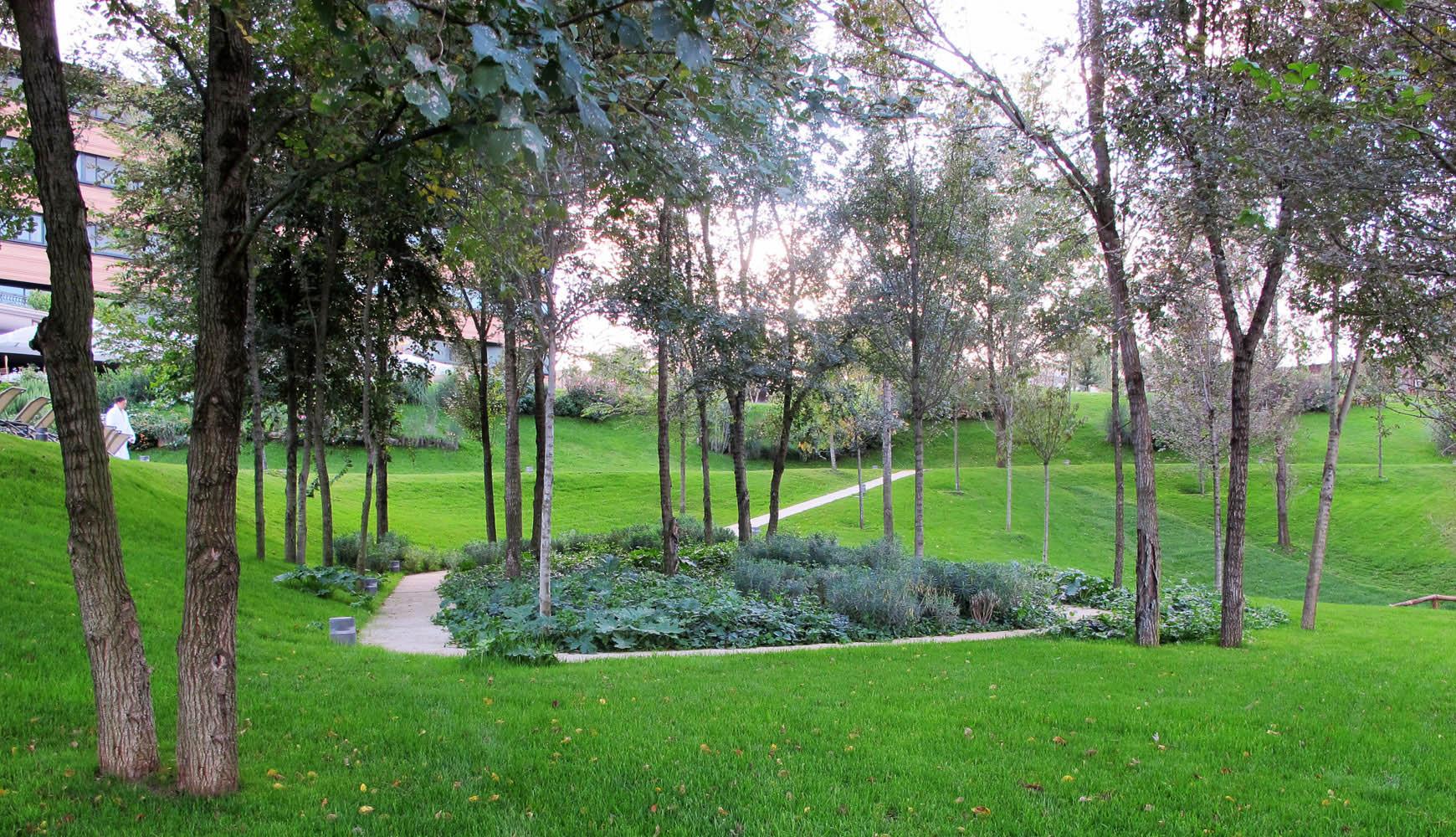 Boschetto al centro del parco