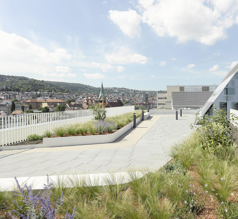 Green roof garden David Matthiessen