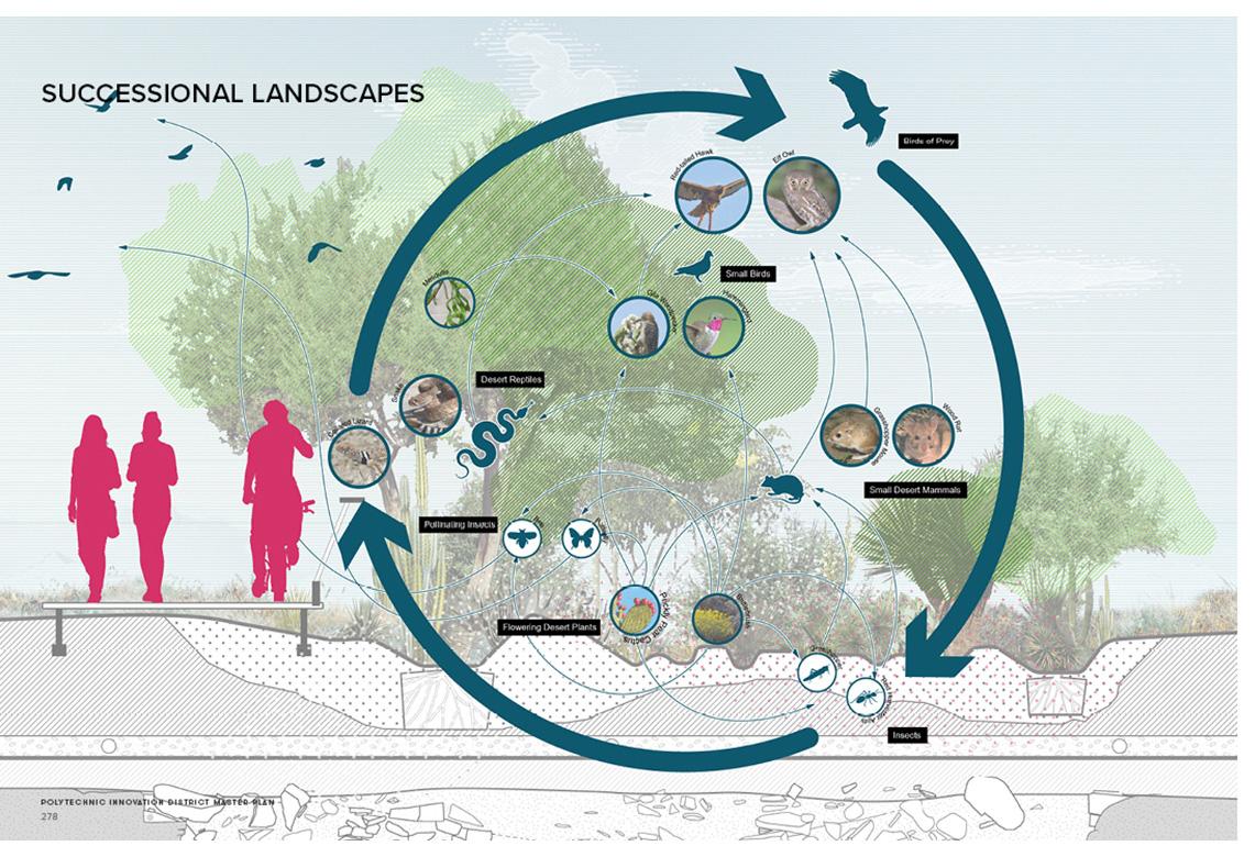 Proposed Desert Landscape Eco-System Sasaki}