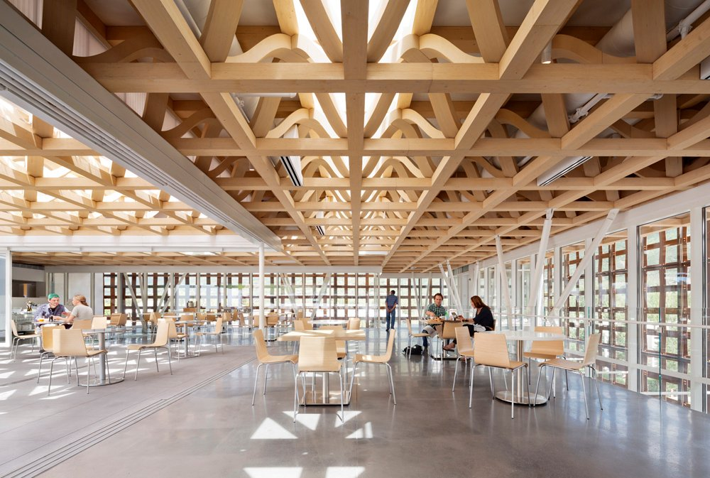 Timber Space-Frame Roof Structure, covers Cafe and part of the Roof Terrace