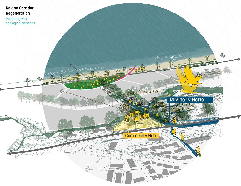 Ravine corridor regeneration }
