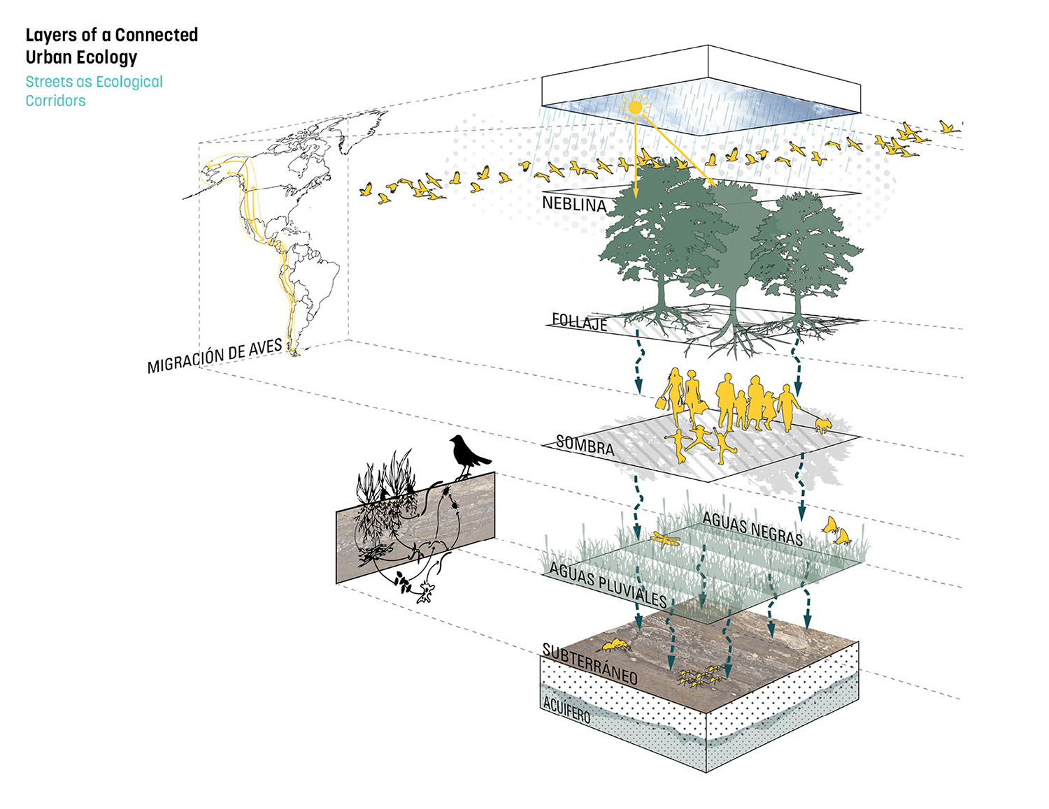 Layers of a connected urban ecology }