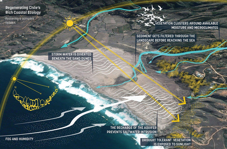 Regenerating Chile's rich coastal ecology