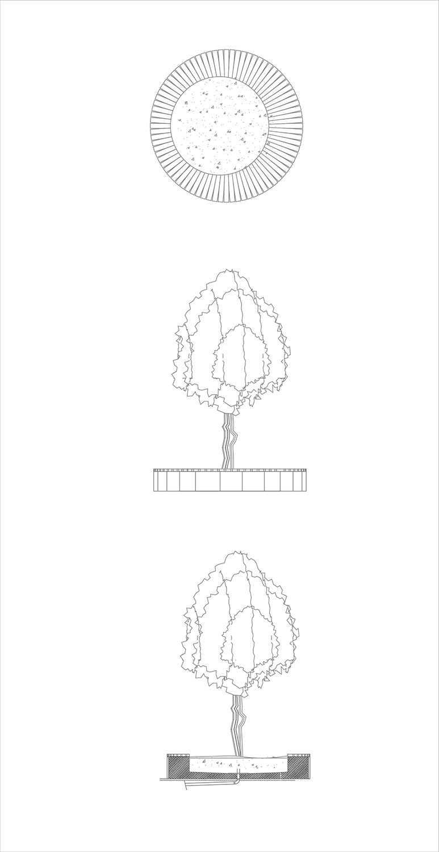 Tree Detail 2 Antalya Metropolitan Municipality Archive}