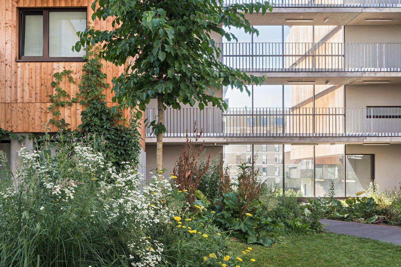 Wood Housing Seestadt Aspern, green courtyards  © hertha hurnaus | berger+parkkinen architekten | querkraft architekten