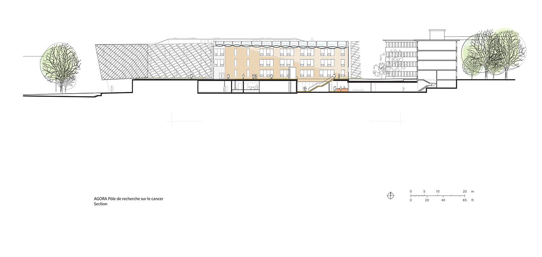 Section Behnisch Architekten}