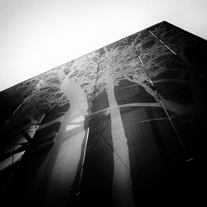 Dettaglio della tela metallica con il disegno degli alberi M. Amato