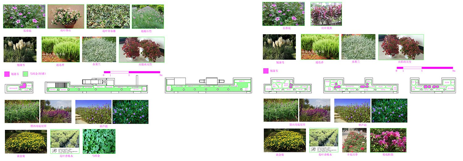 Landscape design: Layer 1 of bushes and flowers composition according to colours, smell and seasonal blossom. Liu Yuelai}