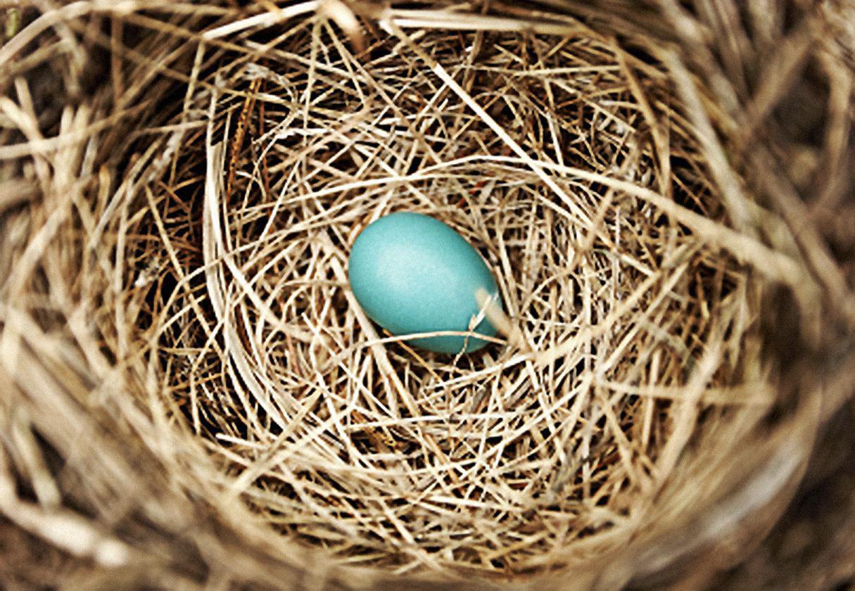 """""""Precious Egg in Nest"""" concept Leers Weinzapfel Associates}"""