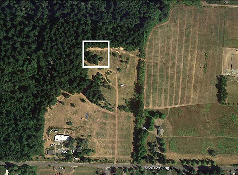 Aerial shot of the festival site at Pendarvis Farm, with rectangle indicating Treeline Stage location Google Earth}