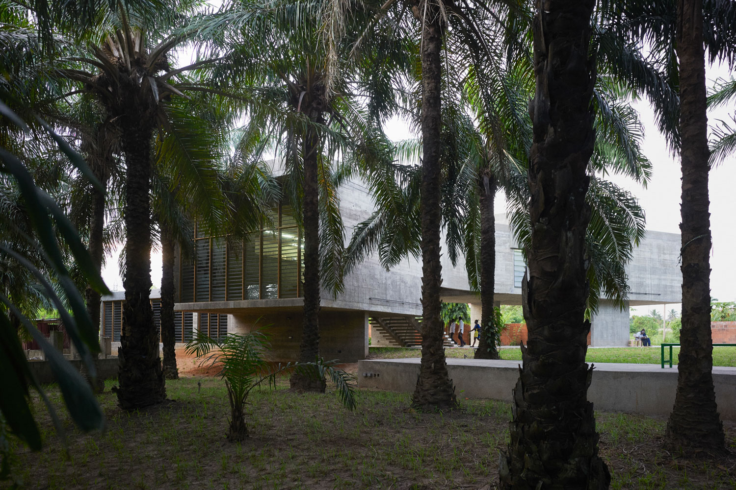 Existing landscape features such as the Nubuke palm grove were integrated into the design of the campus and new gallery building Julien Lanoo