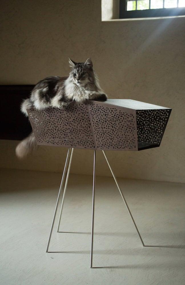 con il gatto sdraiato Elia Falaschi