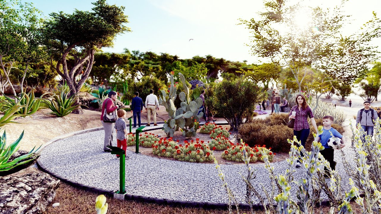 cactus garden Ricardo Valdes