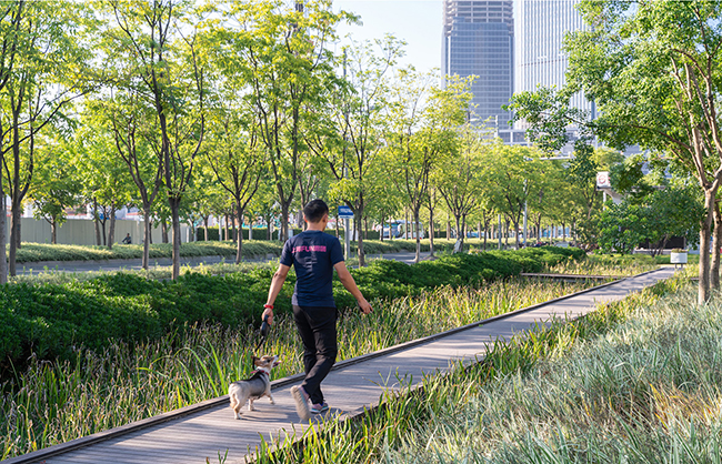 A boardwalk made of fused bamboo lumber leads people through the rain garden of native wetland species, which detains and treats the street runoff. Insaw Photography
