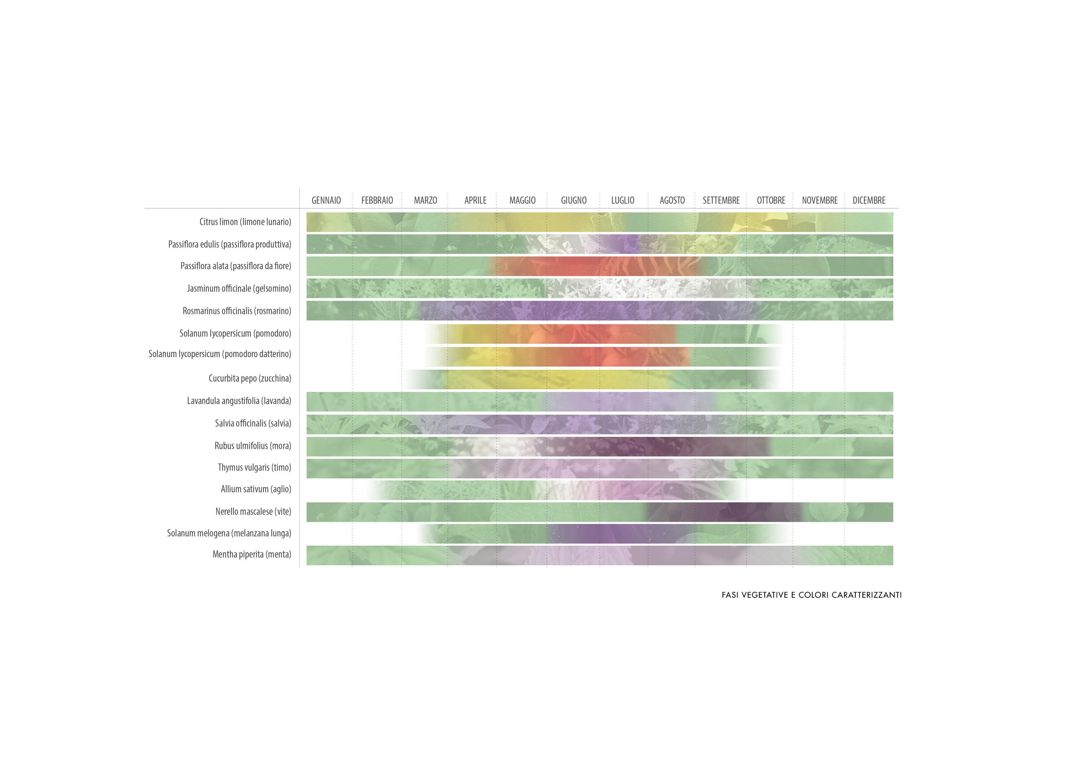 Come back to itaca: fasi vegetative e colori caratterizzanti NaCl Team}
