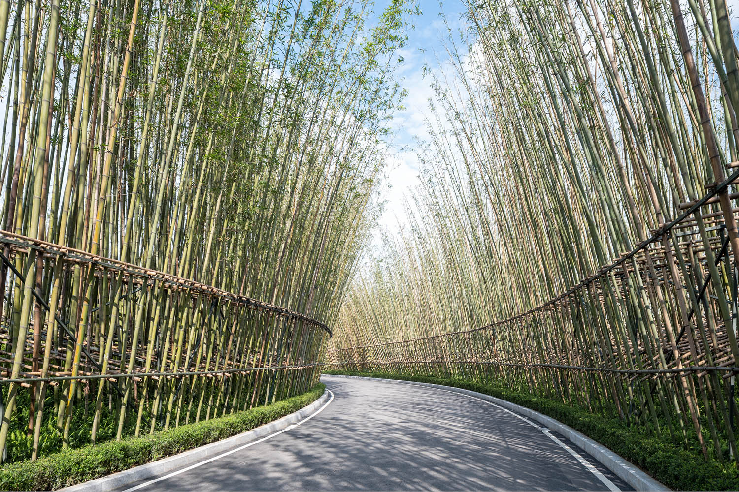 BAMBOO WALK  Upon entering the site, a tranquil bamboo grove offers visitors a strong sense of discovery. SASAKI