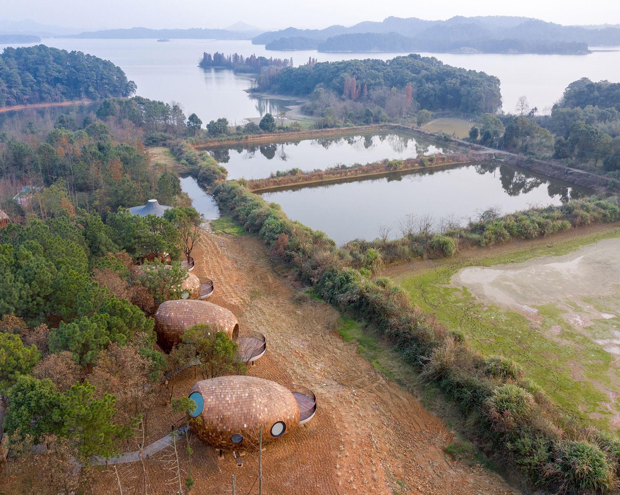 Fangfang Tiang, ZJJZ, TREE WOW